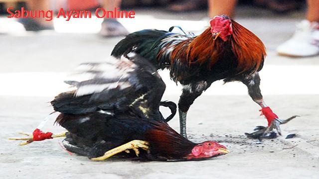 S128 Sabung Ayam Online Indonesia